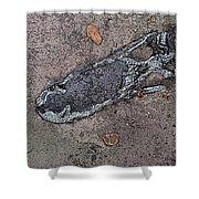 Alligator Skull Fossil 2 Shower Curtain