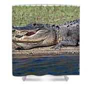 Alligator Sunning Shower Curtain