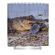 Alligator With A Fish Shower Curtain