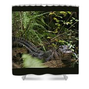Alligator's Life Shower Curtain