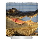Alligator's  Mouth Shower Curtain