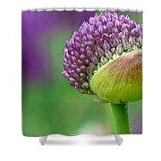 Allium Blooming Shower Curtain