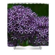 Allium Duet Shower Curtain