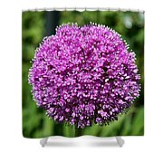 Allium Globe Shower Curtain