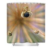 Allium Lucille Ball Seedpod Shower Curtain