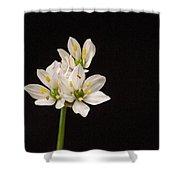 Allium Species 1 Shower Curtain