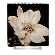 Alluring Anemone Shower Curtain