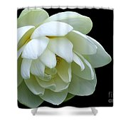 Alluring Lotus Shower Curtain