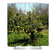 Almanzora Mountain Lemons Winther Spain Shower Curtain