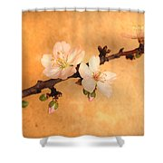 Almond Flowers Shower Curtain