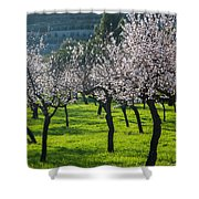Almond Trees In Bloom Shower Curtain