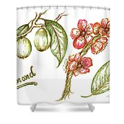 Almond With Flowers Shower Curtain by Teresa White
