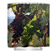 Almost Harvest Shower Curtain