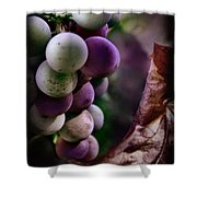Almost Ripe Grapes Shower Curtain