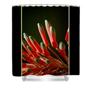 Aloe Bloom Window 2 Shower Curtain