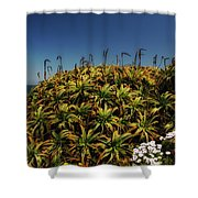 Aloe Is Anyone There Shower Curtain