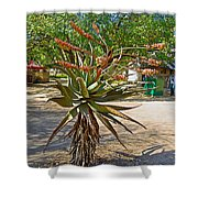 Aloe Plant In Kruger National Park-south Africa Shower Curtain