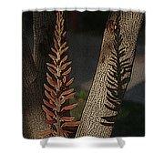 Aloe Stalk Shower Curtain