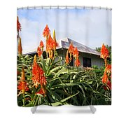 Aloe Vera And Tin Roof Plantation House Shower Curtain