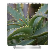 Aloe Vera Leaves  Shower Curtain