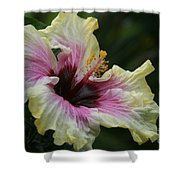 Aloha Aloalo Tropical Hibiscus Haiku Maui Hawaii Shower Curtain
