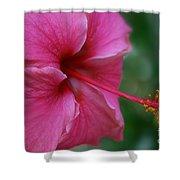 Aloha Aloalo Ulu Wehi Pink Tropical Hibiscus Wilipohaku Hawaii Shower Curtain