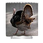 Aloha Turkey Shower Curtain