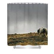 Alone - Wild Horse - Green Mountain - Wyoming Shower Curtain