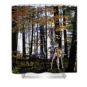 Alone In The Mist Shower Curtain
