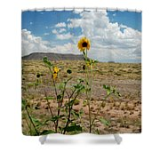Along Route 66 In Arizona Shower Curtain