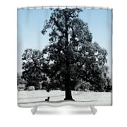 Along The Path Shower Curtain