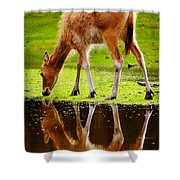 Along The Water Grazing Pere David's Deer Shower Curtain