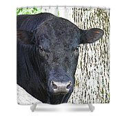 Alot Of Bull Shower Curtain