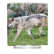 Alpha Wolf On The Move Shower Curtain