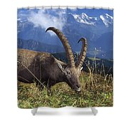 Alpin Ibex Male Grazing Shower Curtain by Konrad Wothe