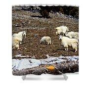 Alpine Mountain Goats Shower Curtain