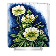 Alpine Ranunculus Shower Curtain