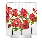 Alstromeria Shower Curtain