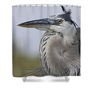 Am I Gorgeous Shower Curtain