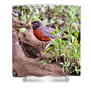 Am Robin Shower Curtain