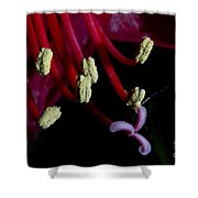 Amarilla Flower   #9398 Shower Curtain