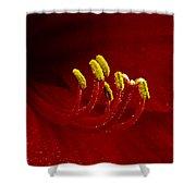 Amaryllis 2 Shower Curtain