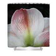 Amaryllis #3 Shower Curtain
