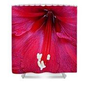 Amaryllis Close-up Shower Curtain