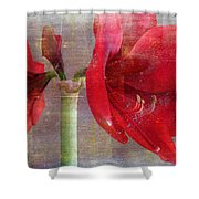 Amaryllis In The Rough Shower Curtain