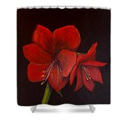 Amaryllis On Black Shower Curtain