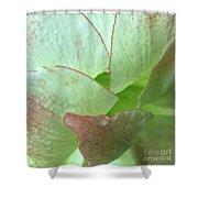 Amaryllis Petals Shower Curtain