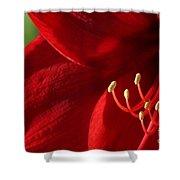 Amaryllis6739 Shower Curtain