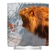 Amazing Male Lion Shower Curtain