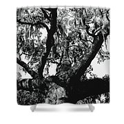 Amazing Oak Tree Shower Curtain
